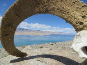 Tadschikistan Karakul See mit einem Horn eines Marco-Polo-Schafes